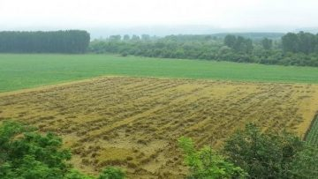 1960908wheat