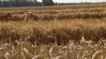 27571827krediti_agriculture