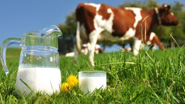 34740784myths-about-cows-milk