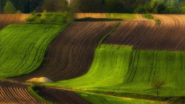 41282048for-20-years-ive-been-photographing-polands-fields-which-look-like-sea-waves-12__880