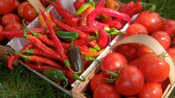 43432505tomatoes-and-peppers