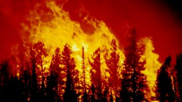 456085501379021949_forest_fire_blm_image
