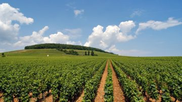 4731938Agriculture_Home_newweb