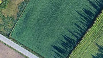 47385405field_farmland_road_tree_farm-79332