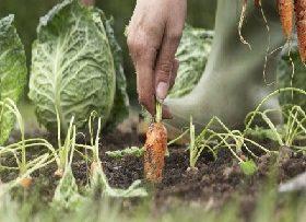 48372941vegetables-harvest