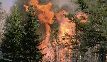 49625154forest-fire22