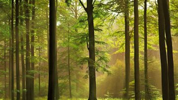 52706058green-forest-1