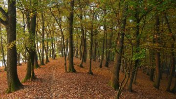 7658383forest-path