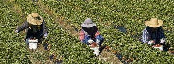 82307898barbados-canada-farm-workers