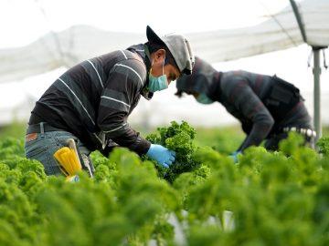 Farming during a pandemic