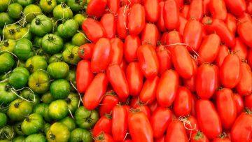 9368226zelenie-krasnie-tomaty