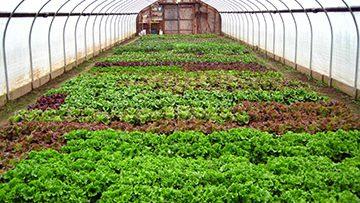 Winter-greenhouse1
