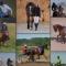 конете на българия – снимка шапка