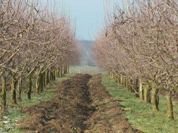 овошки, ябълки, зима