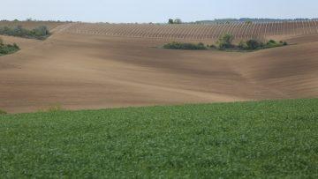 поле,нива