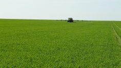 пшеница агро тв