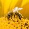 Агротема: С грижа за пчелите, автор: Валери Станев