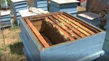 кошер, пчели