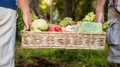 Midsection of colleague carrying vegetables crate at garden