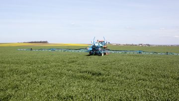 пръскане на пшеница пролет