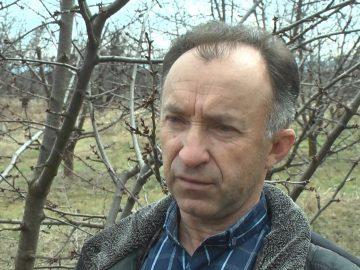 череши кюстендил Димитър Сотиров
