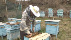 пчелин пролет