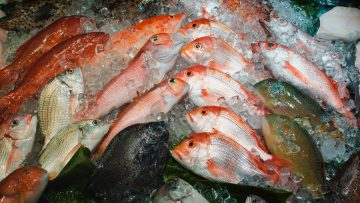 Closeup shot of a lot of fish covered with ice in a fish market