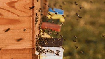 bee-colonies-4027005_960_720