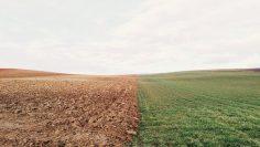 farmland-801817_640