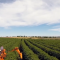 Новина плюс: Фермерите срещу климатичните промени