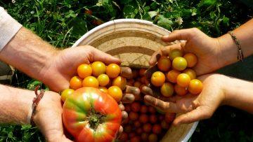 pomodori-bio