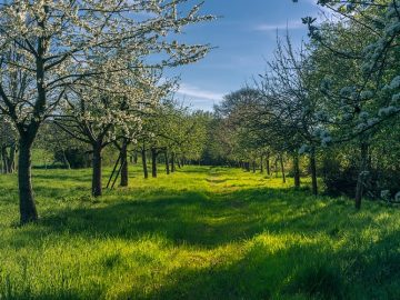 spring-4158957_960_720