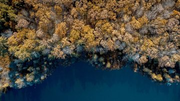 Aerial shot of a forest near the sea – great for background or a blog