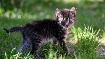 Closeup selective focus shot of a cute kitten with sad expressive eyes