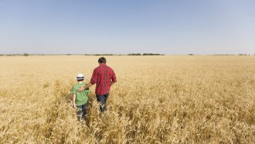 View from behind of father and son walking in wheat