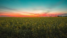 Breathtaking view of a flower field under the amazing colorful sky in Middleburg, Netherlands