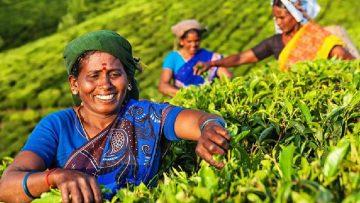 чай Индия
