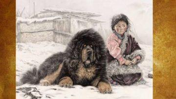 tibetskimastif