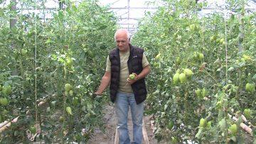 Георги Иванов, бригадир в оранжерии