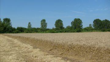 пшеница поле пестицид