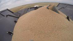 пшеница хамбар комбайн