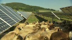 соларен парк овце