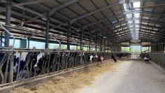 ферма хранене фураж