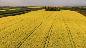 serbia-agricultural-fields-with-yellow-rape-field-aerial-view-at-summer-NOF00021