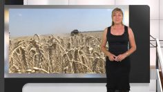Агропрогноза_ Остава опасността от градушки и нанасяне на повреди по земеделските култури.mp4_snapshot_02.25.784
