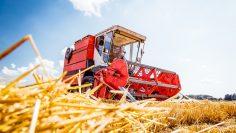 Mähdrescher erntet reifen Weizen. Landwirtschaft