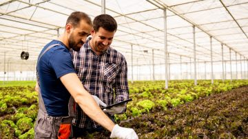 Two researchers monitor the condition of salad plants with tablet in hand