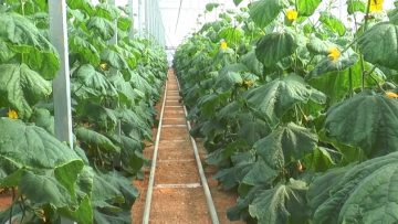 Plantprotection26