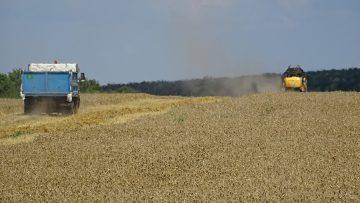 жътва пшеница поле