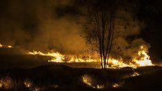 Farmers burn field